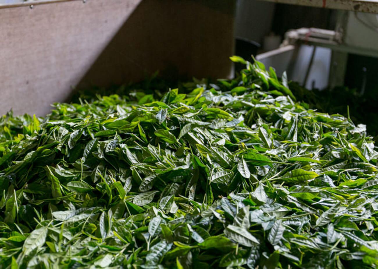 """うきはの山茶 / 有機緑茶有機焙じ茶有機紅茶有機烏龍茶特集4"""" width="""