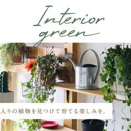 【植物】インテリアグリーン
