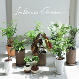 インテリア 植物特集